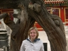 Forbidden city.Gate of trees.